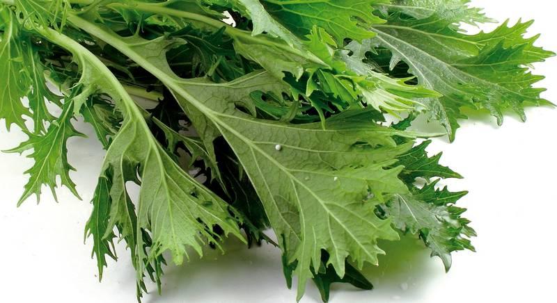 Японская капуста, или мизуна: лучшие сорта и правила выращивания