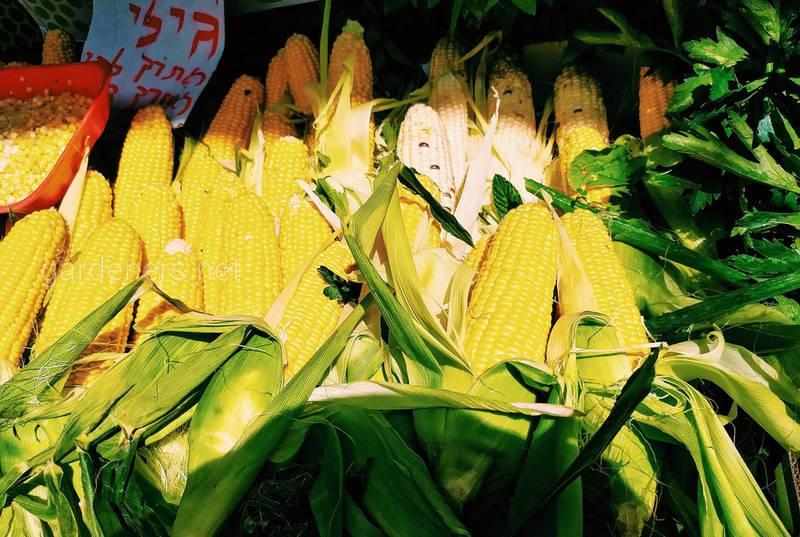 Склад і калорійність кукурудзяної крупи