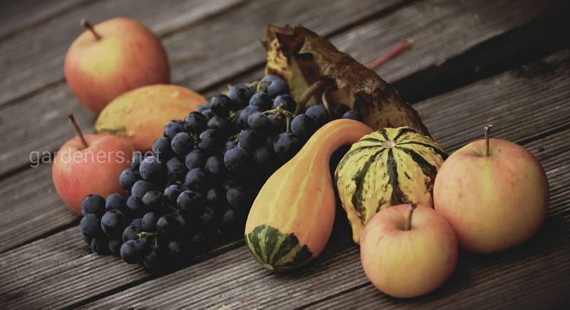 fruit-3749412_1920