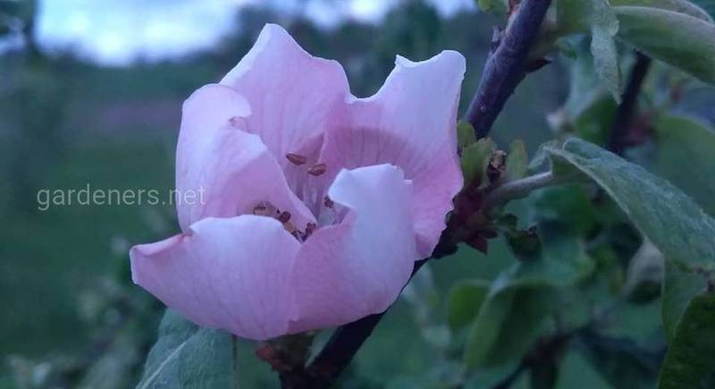 Сад весняних ароматів