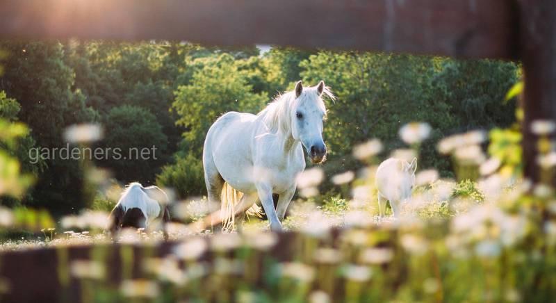 Какие лошади считаются самыми дорогими в мире: описание видов