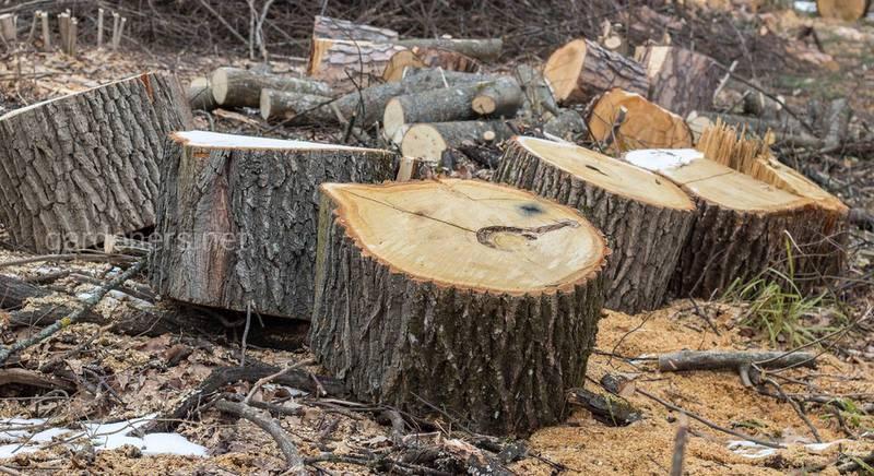 Несколько интересных идей, как использовать спиленное дерево на приусадебном участке