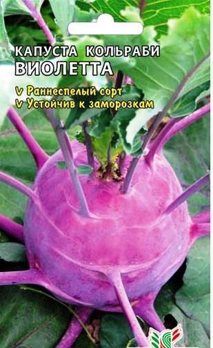 Сорта кольраби Виолетта