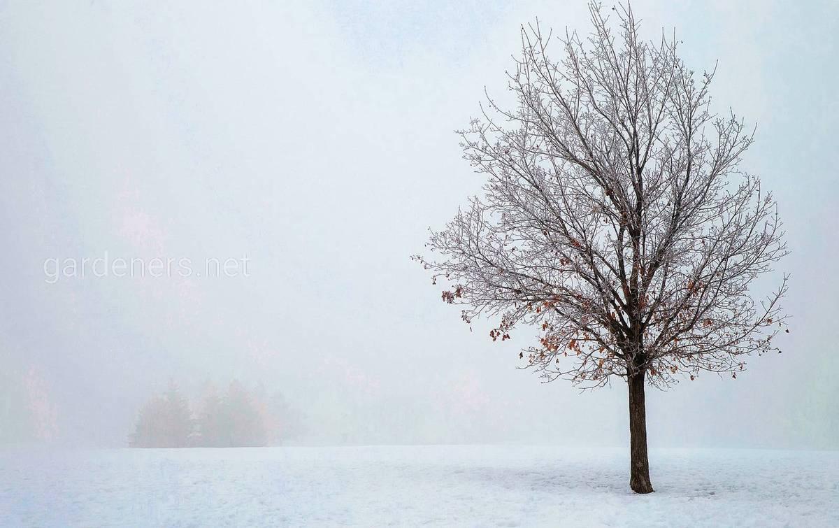 зимняя дымка
