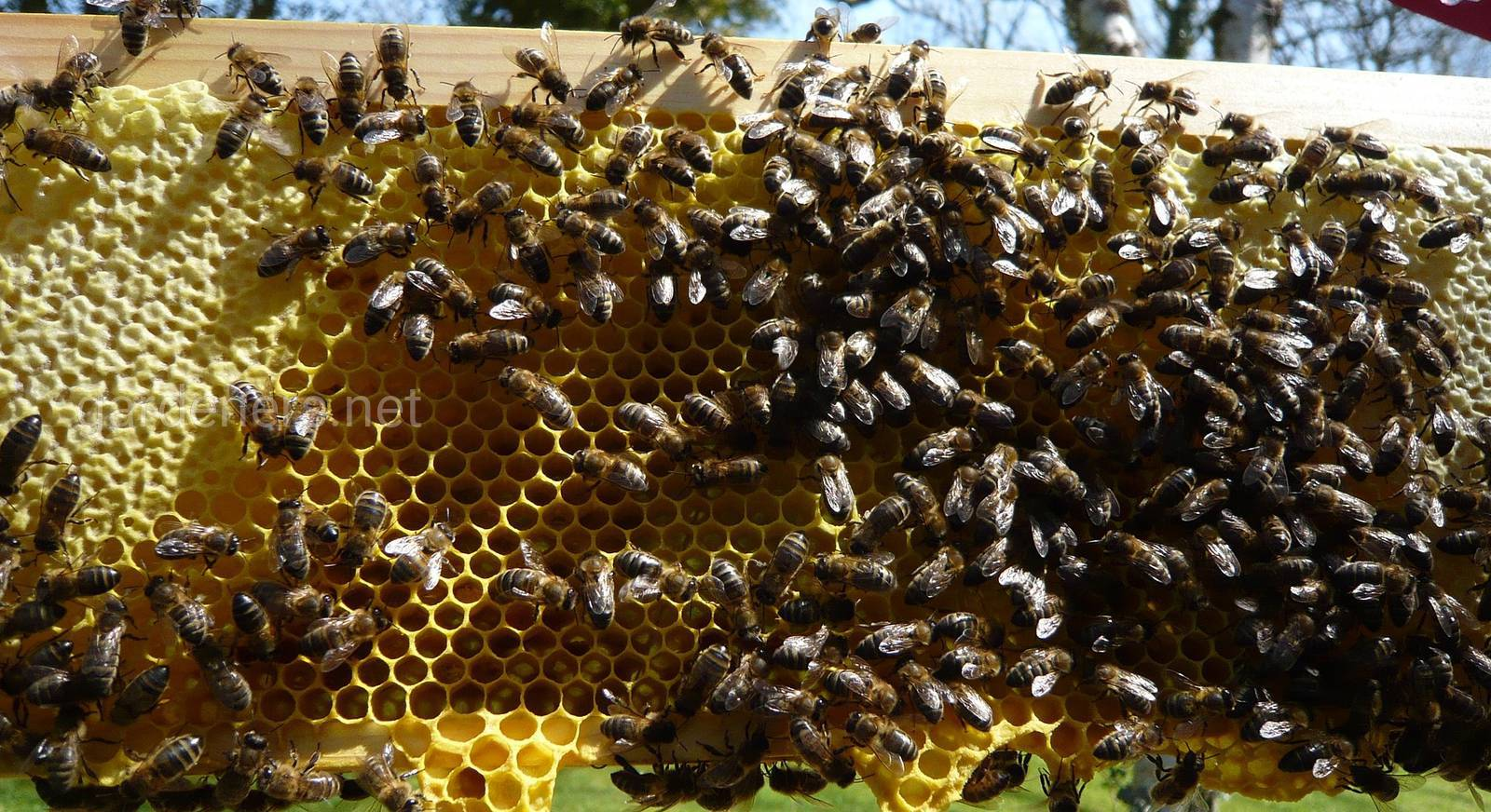 ошибки пчеловодов.jpg