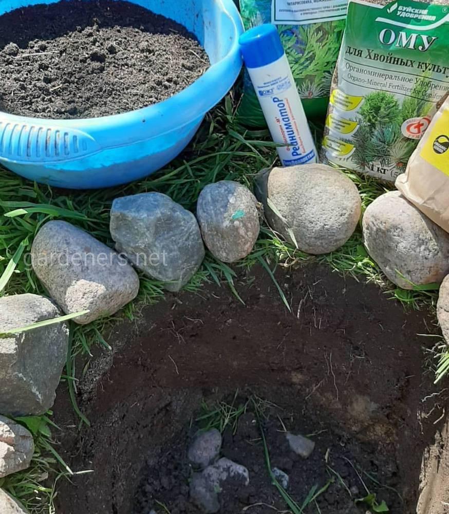 готовим посадочную яму размером 60×60см