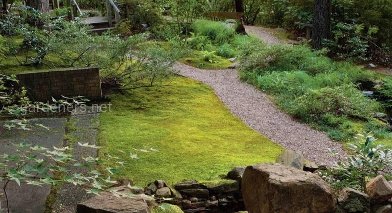 Лісовий стиль саду – ландшафтний дизайн, створений природою