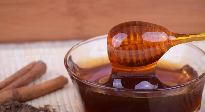 Вкусный и полезный мёд из дягиля