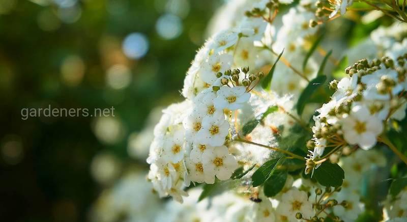 ТОП-7 растений, которые цветут летом и осенью