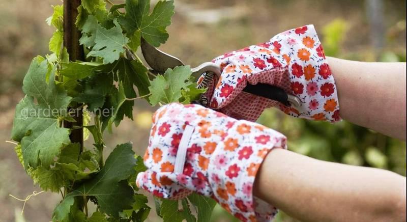 Зеленое черенкование в летний период и альтернативные способы размножения растений