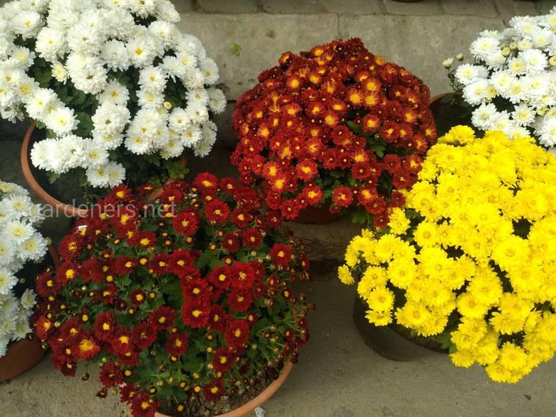 Які квіти можна вирощувати на балконі, на робочому місці, в дитячій та ванній кімнаті?
