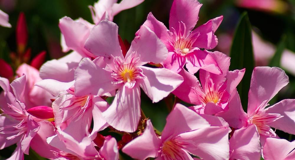 flowers-815761_1920.jpg