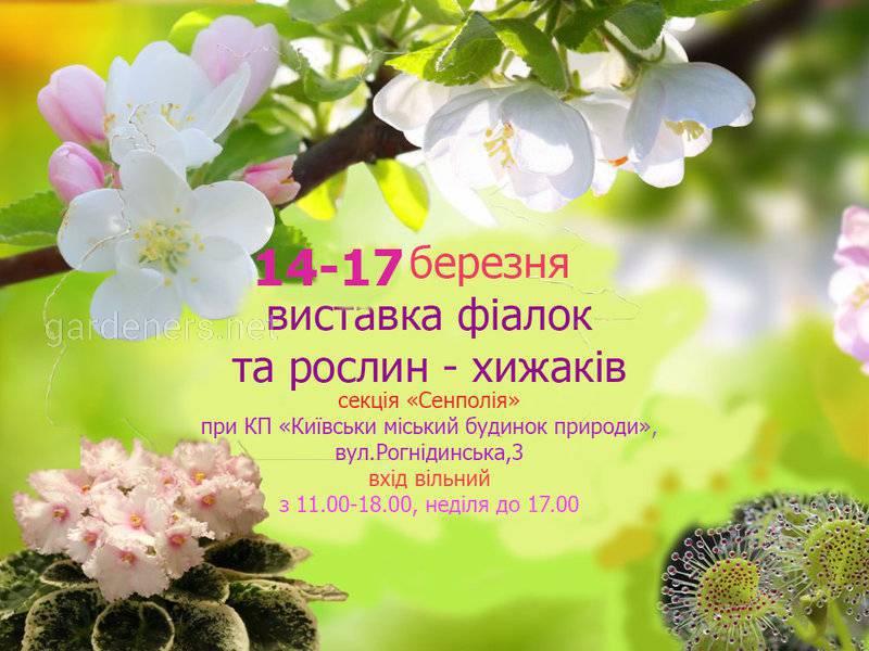 выставка дом природы 4.jpg