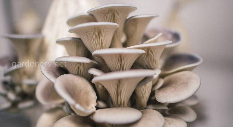 Как правильно оборудовать теплицу для выращивания грибов?