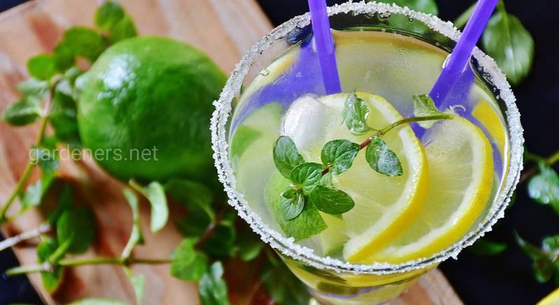 Лимонад классический рецепт