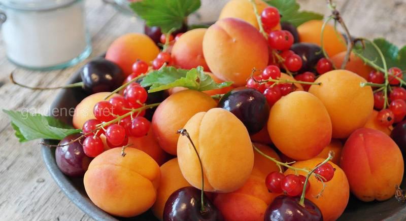 Какими ягодами, овощами и фруктами изобилует июль