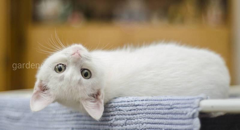Как воспитывать маленького котенка