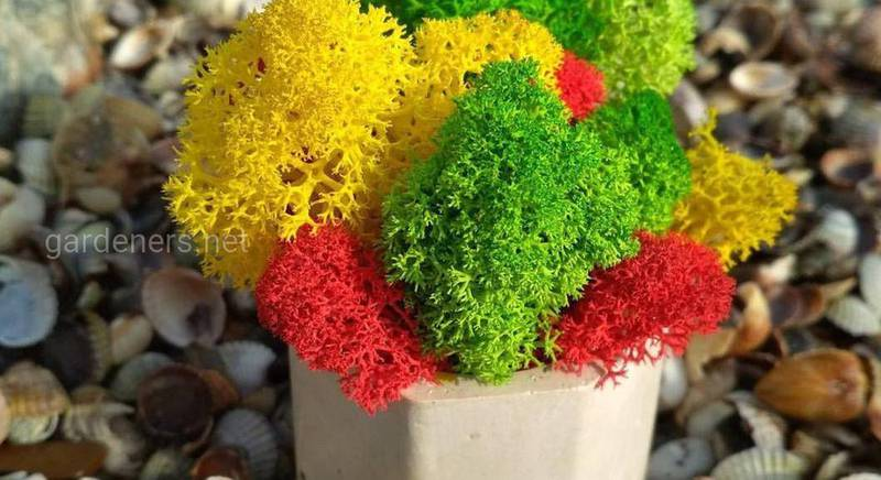 Стабилизированный мох, созданный для оформления комнат в натуралистическом стиле