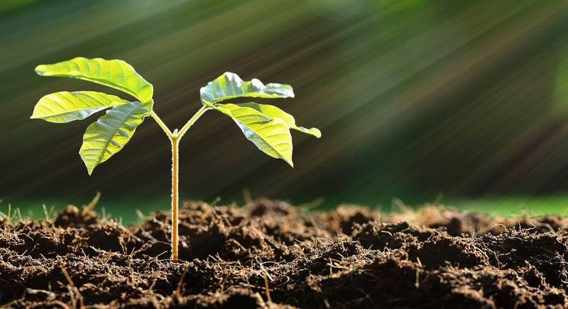Разновидности органических удобрений и правила их внесения