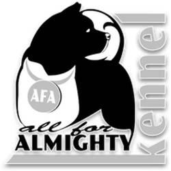 Питомник американских акит ALL FOR ALMIGHTY