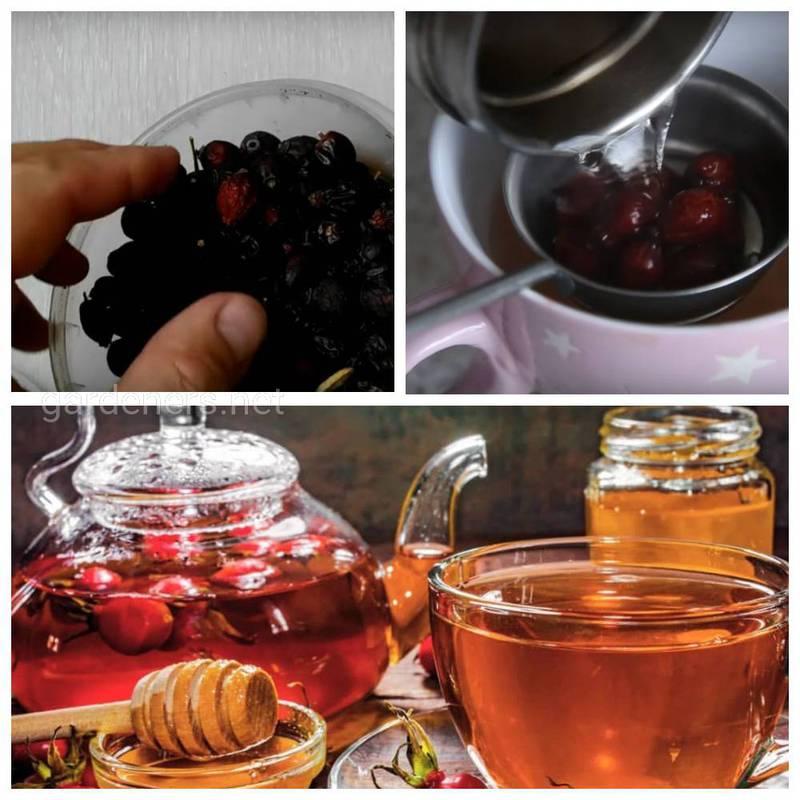 Чим корисна шипшина та чай з неї?