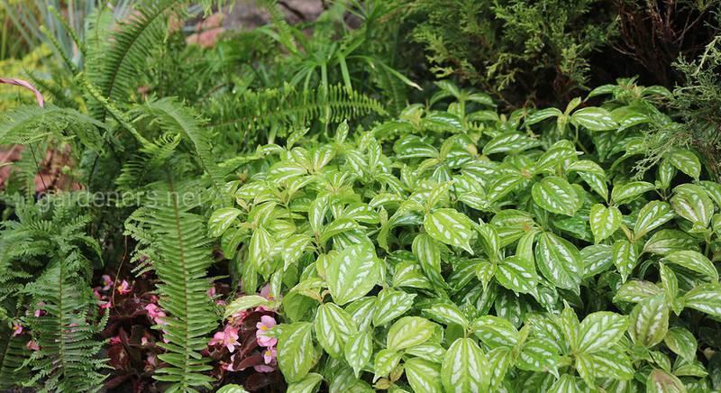 Рекомендации по подбору растений для не цветущей клумбы