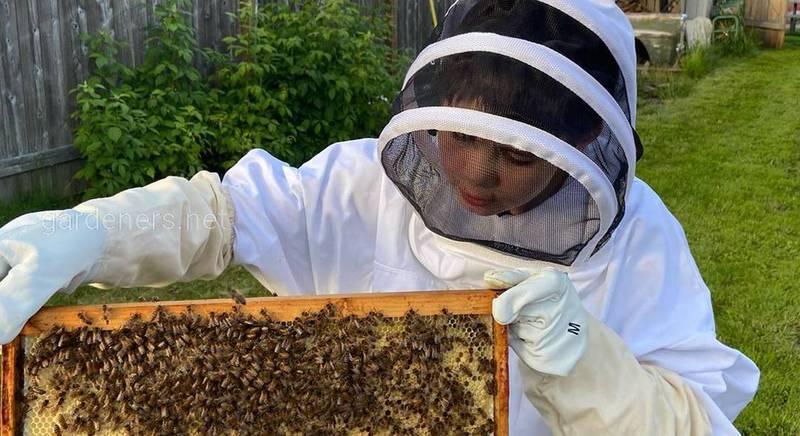 Детям о пчелах