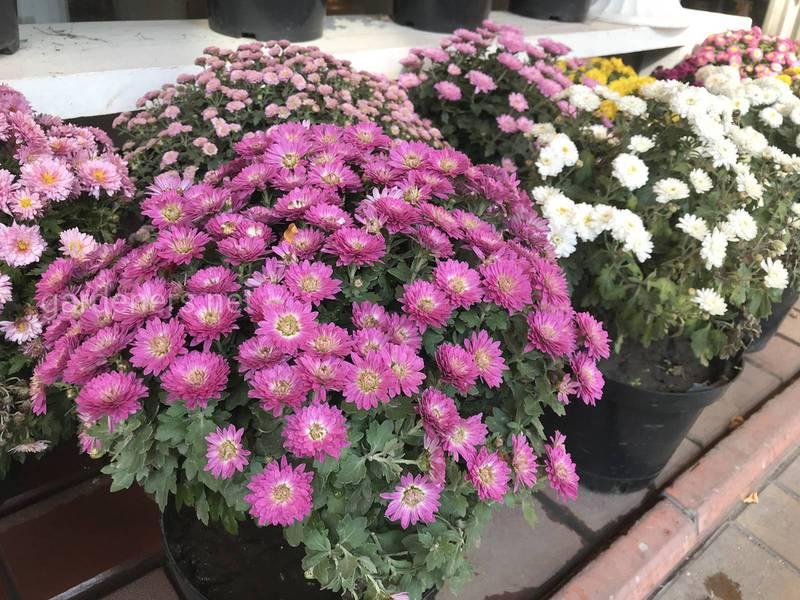 Які квіти полюбляють багато сонця?