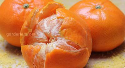 Как использовать мандариновую кожуру: ароматизатор, удобрение, отпугиватель котов и многое другое