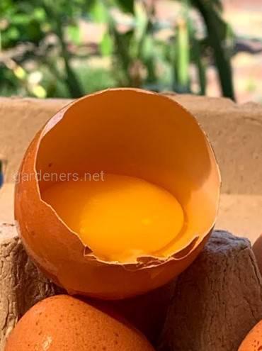 Княжа Ферма яйцо