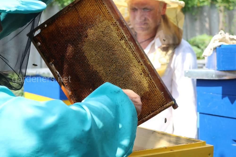 Здорова бджола – основа прибутку