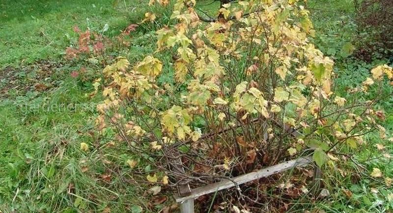 Нужна ли осенью обрезка