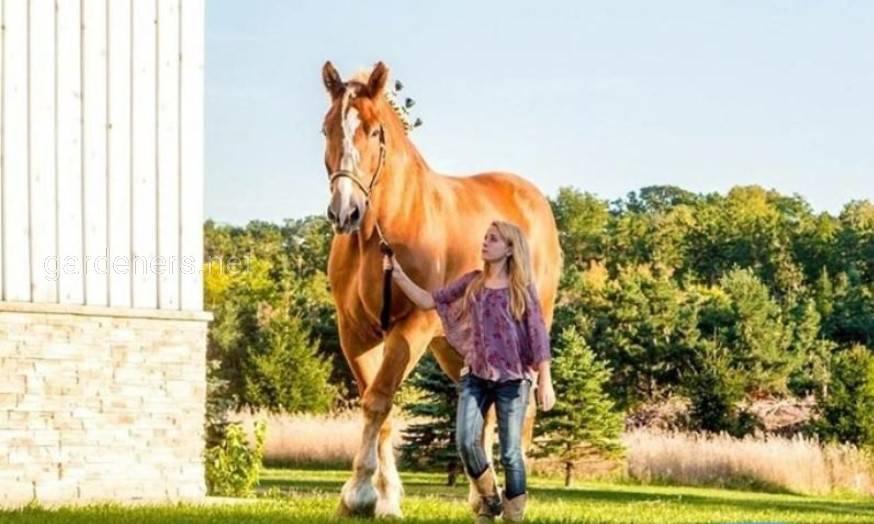 Биг Джейк высокая лошадь