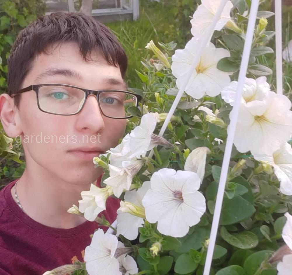 Цветы петунии — посадка и уход за этими прекрасными цветами