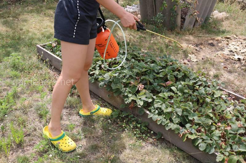 Коли ефективне та корисне позакореневе підживлення рослин?