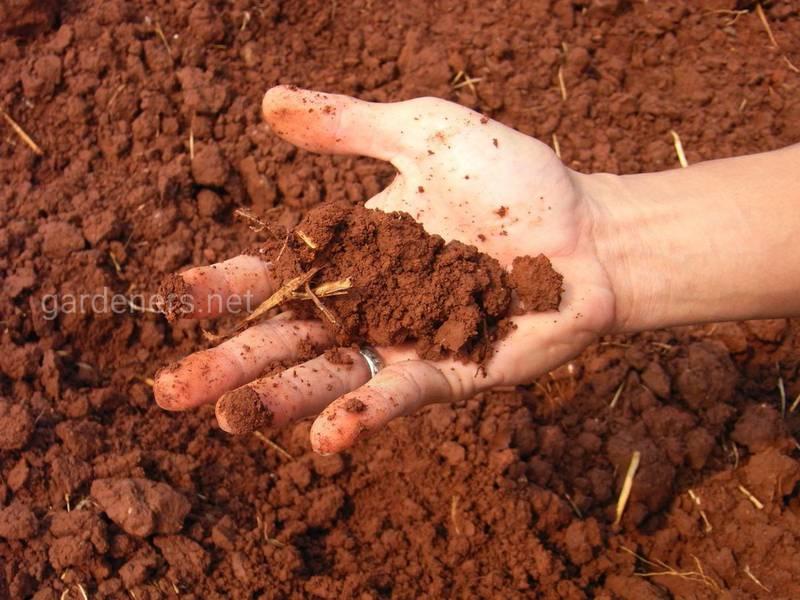 Обработка почвы перед посадкой рассады.