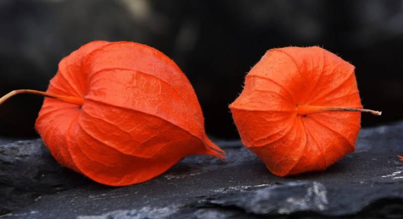 Полезные свойства изумрудной ягоды