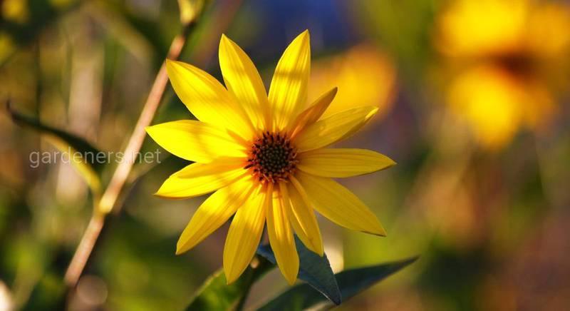 Осенняя десятка: октябрьские цветы и кустарники