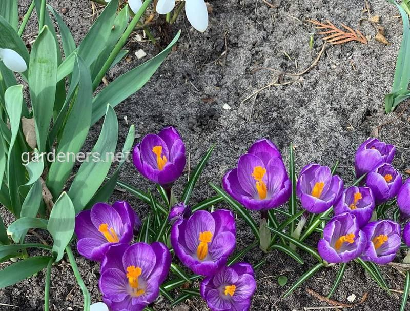 Что с нами делает весна