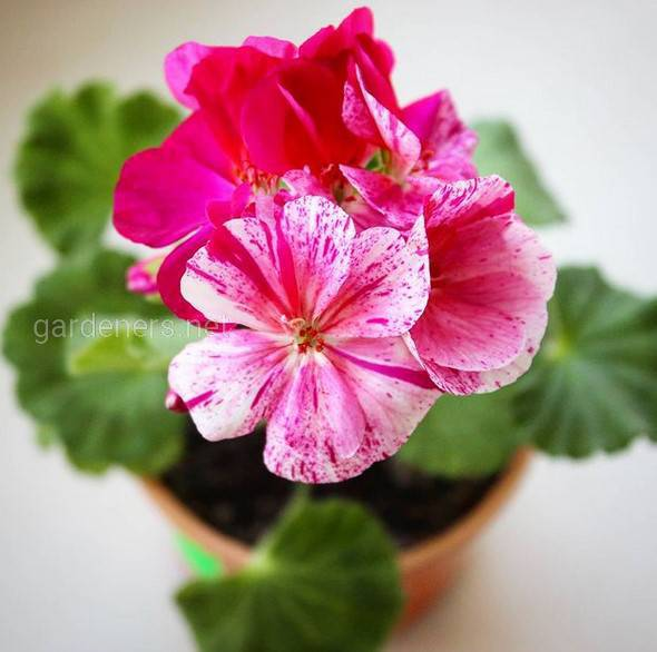 Какие цветы нужно выращивать у восточного окна?
