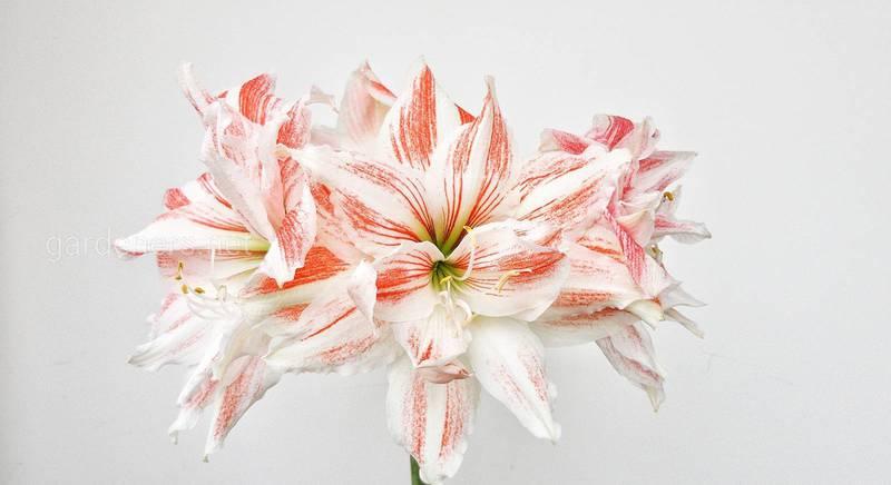 Топ-10 комнатных представителей флоры, которые зацветают с декабря по февраль