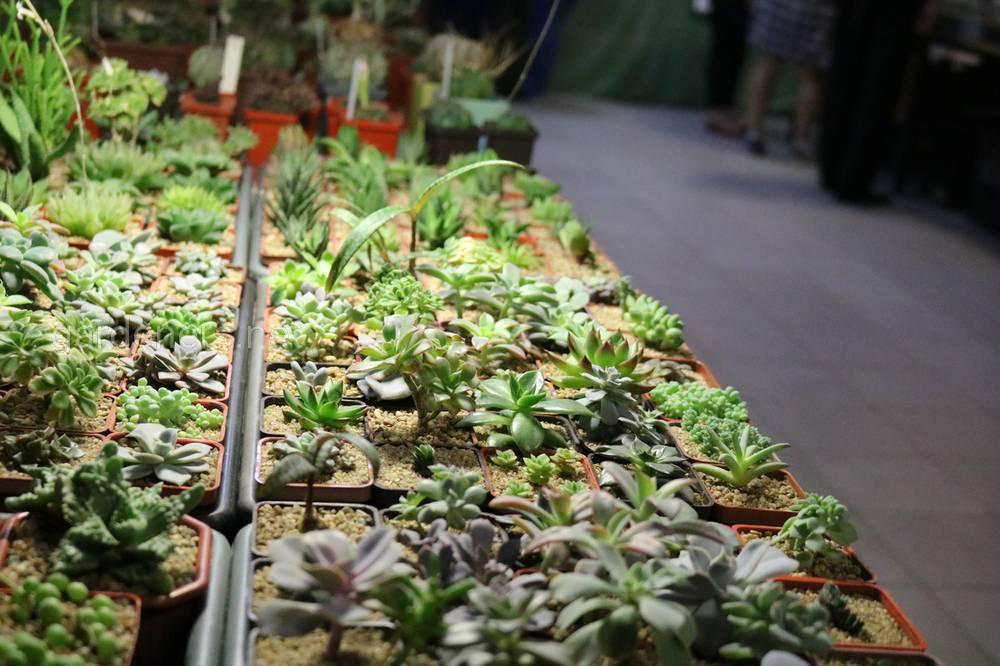разнообразие кактусов на выставке в доме природы