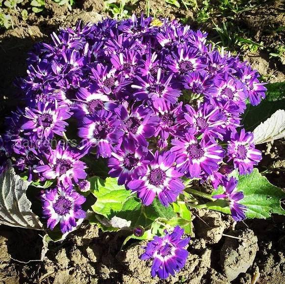 Какие многолетние теплолюбивые растения можно забрать домой на зиму?