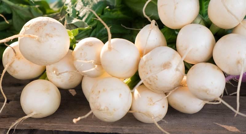 Лучшие сорта белого редиса и правила выращивания