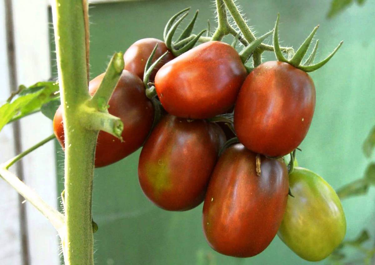 Сорт томата Де барао-черный