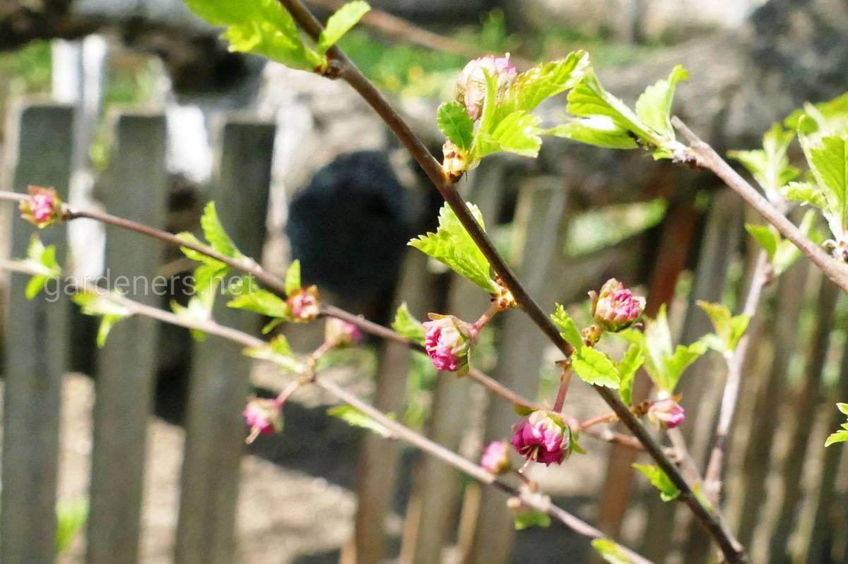 Цветет весной