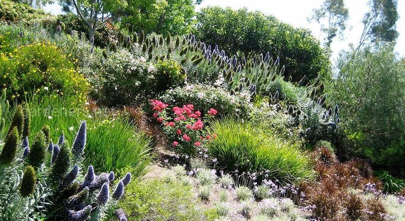 Список растений для территории со склоном: травянистые, вечнозеленые, деревья и кустарники