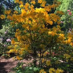 Ботанічний сад ім. О. Фоміна / O. Fomin Botanical Garden