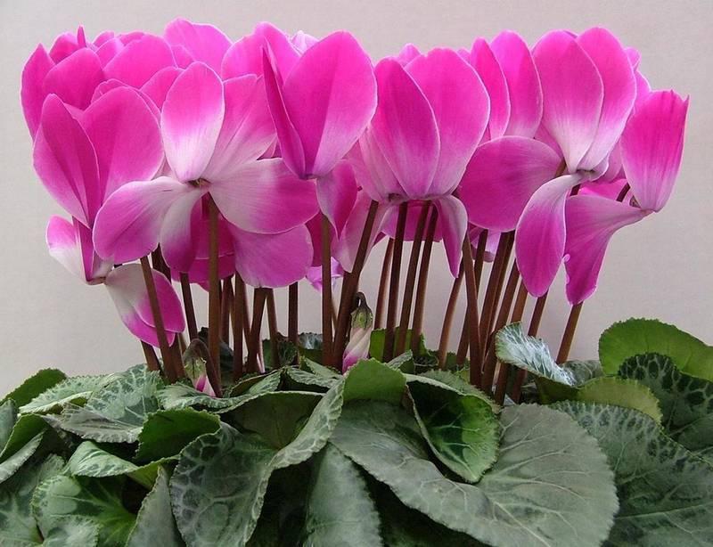 Як захистити домашні квіти від хвороб та шкідників взимку?