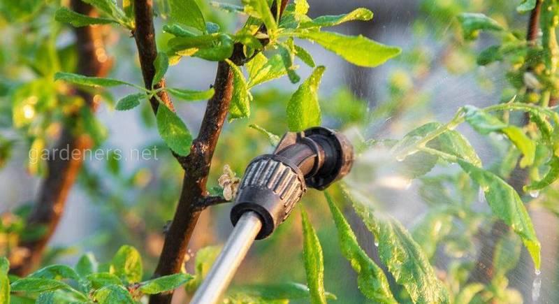 Обработка сада от вредителей и болезней летом